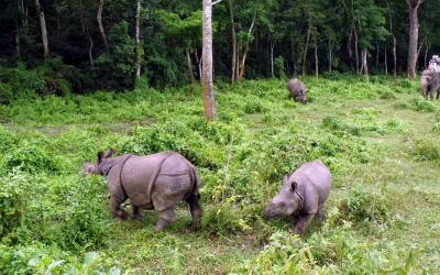 Bardiya National Park (3 nights 4 days Jungle Safari)