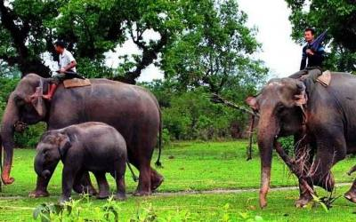 Chitwan National Park (4 days outside park Safari)